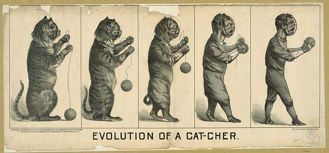 An old print from the 1880s showing a cat evolving into a catcher.
