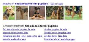 """Google query suggestions on a search for [find airedale terrier puppies]"""