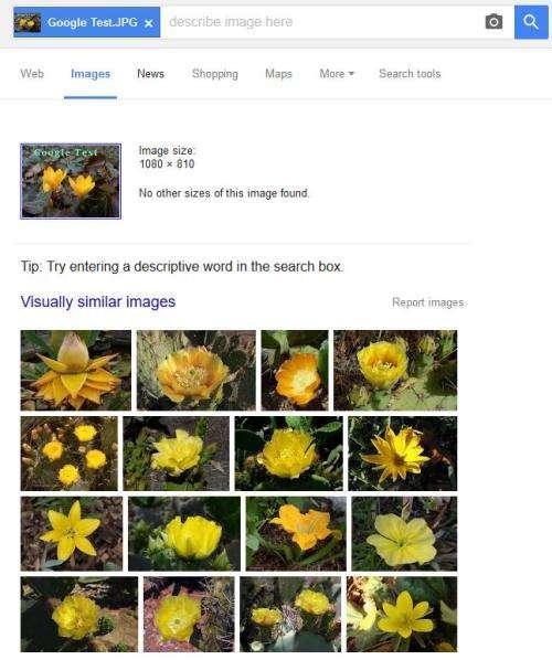 visually similar images