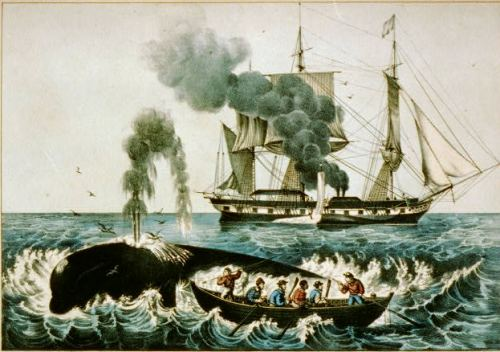 Whalers in a rowboat fighting a whale, with their ship behind them in the distance.